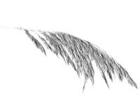 1_vinge-3.jpg